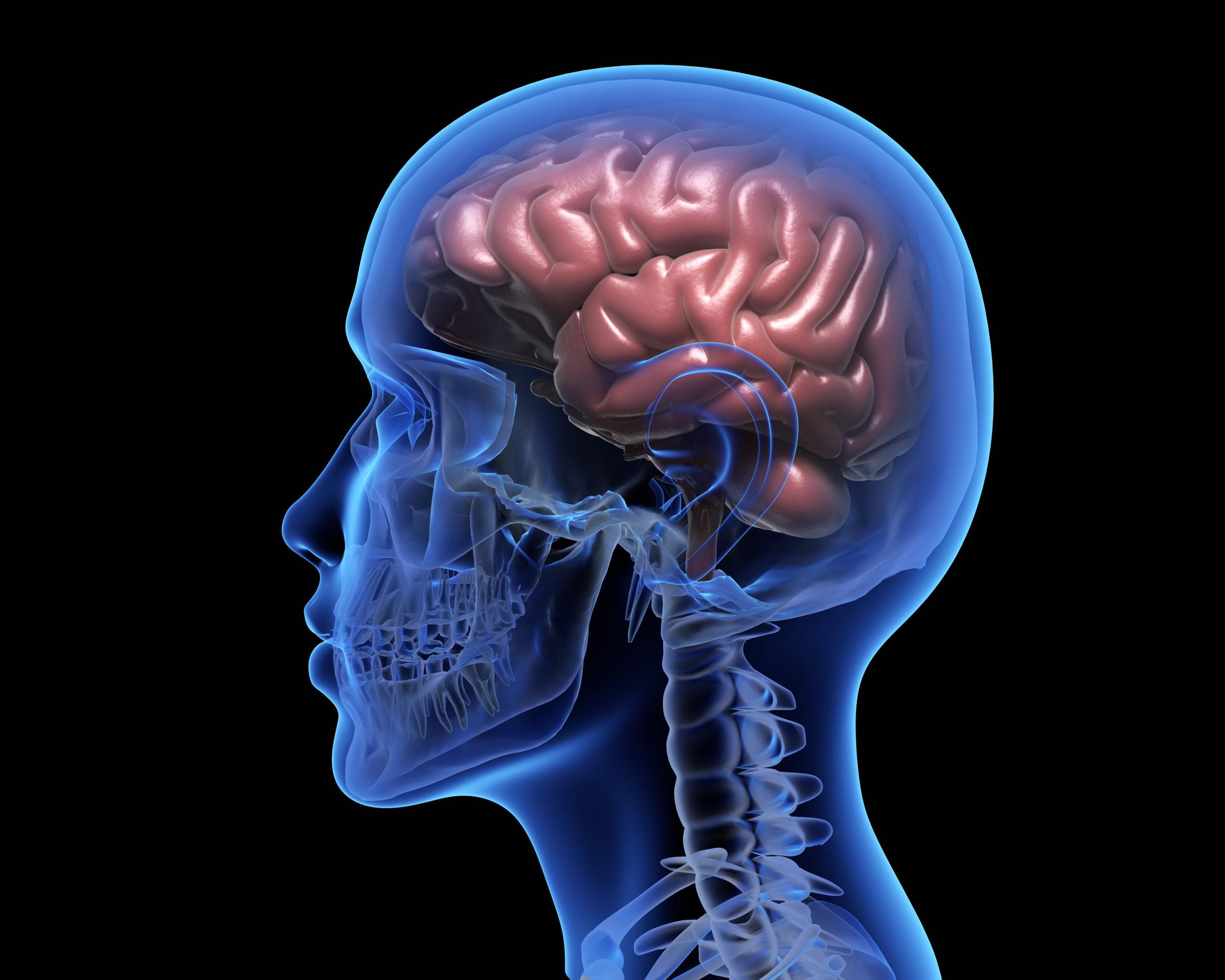 """""""Enamórate de tu cerebro"""", la propuesta educativa para que los jóvenes aprendan sobre el sistema nervioso"""