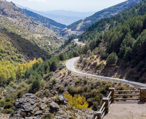 Reforestación masiva en el Parque Natural de Sierra Nevada.