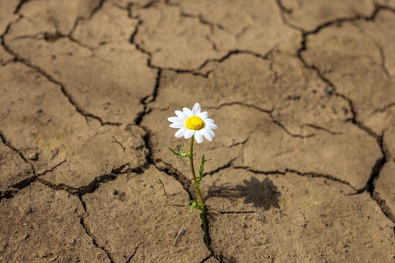 La resiliencia por Giuseppe Favale